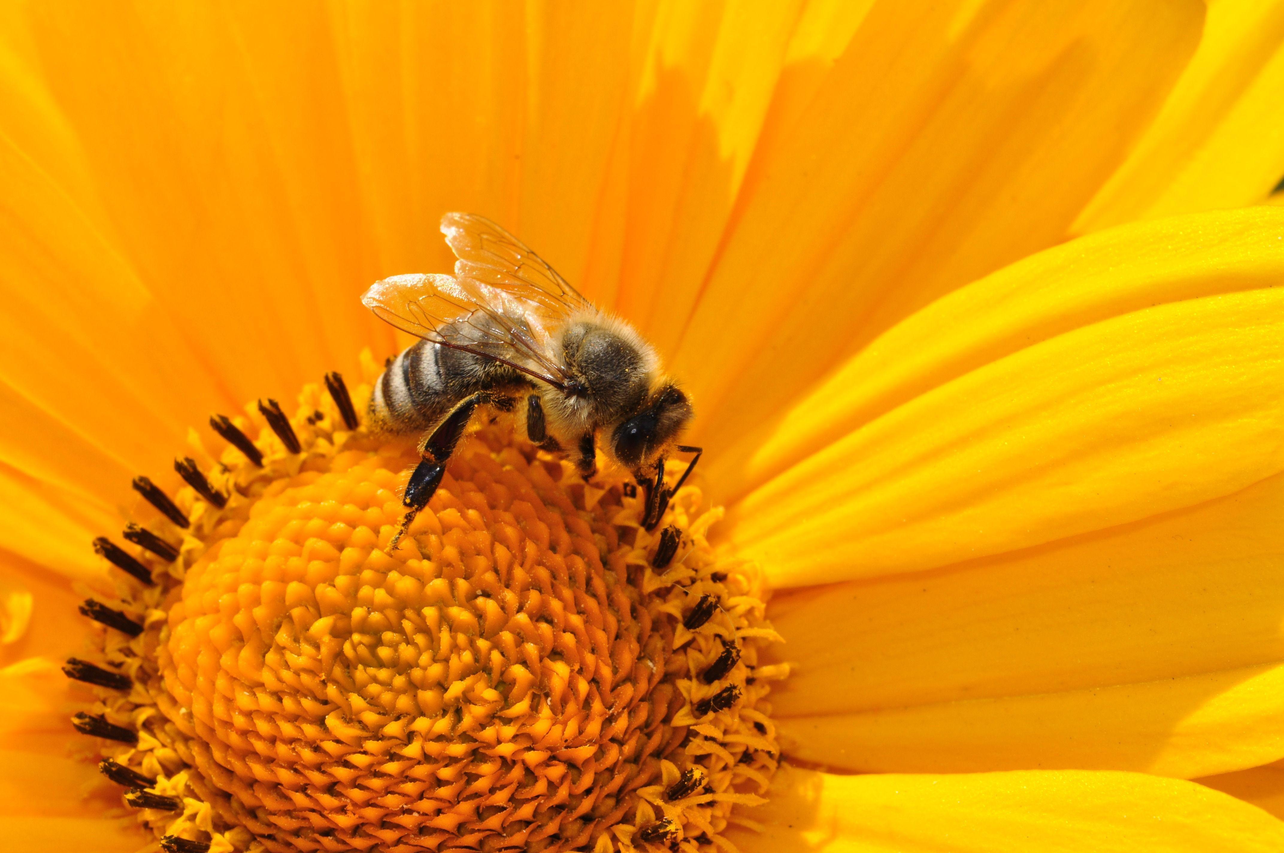 Raum schaffen für Bienen